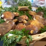 Funghi Porcini Liguri